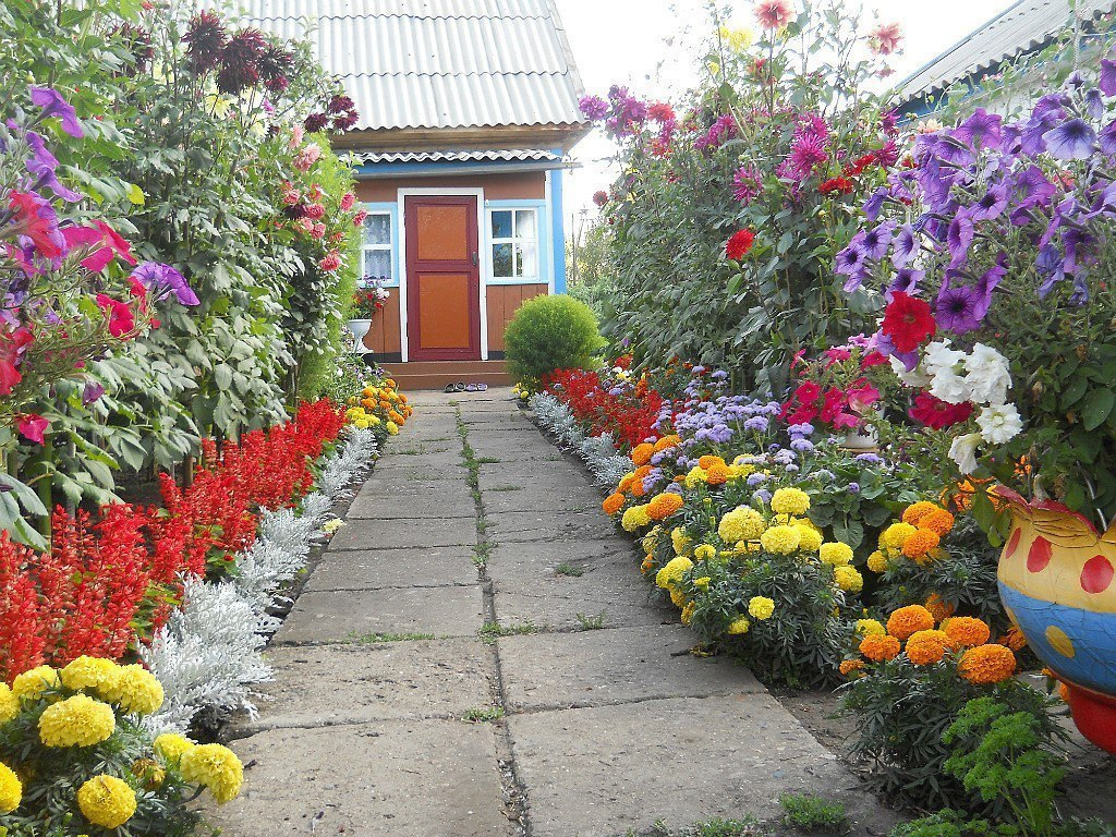 Фото цветников своими руками на даче цветущее всё лето