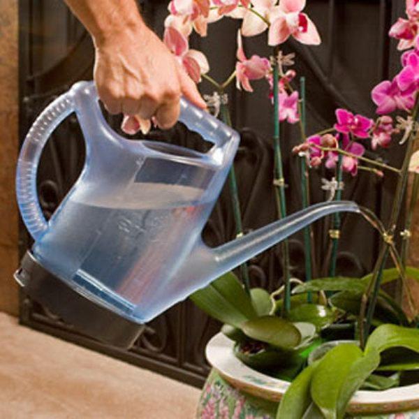 Чем поливать цветы в домашних условиях 453
