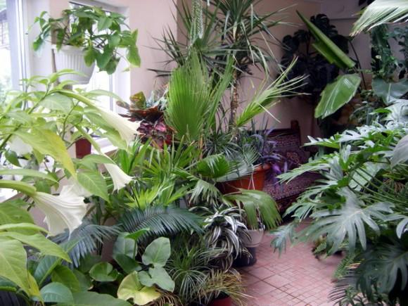 Комнатные растения: как правильно подготовить их к зиме