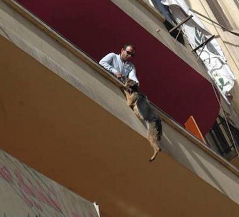 Жестокий хозяин повесил собаку с балкона на цепь. она провис.