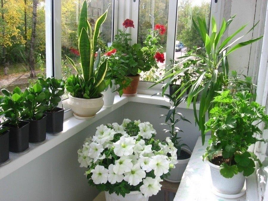 Цветы для солнечной стороны квартиры