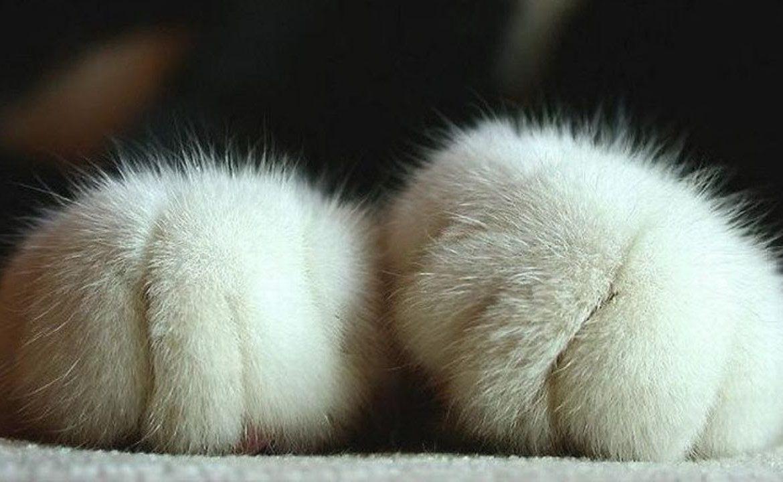 архиве пользла или вред когда кошка топчат лапами это