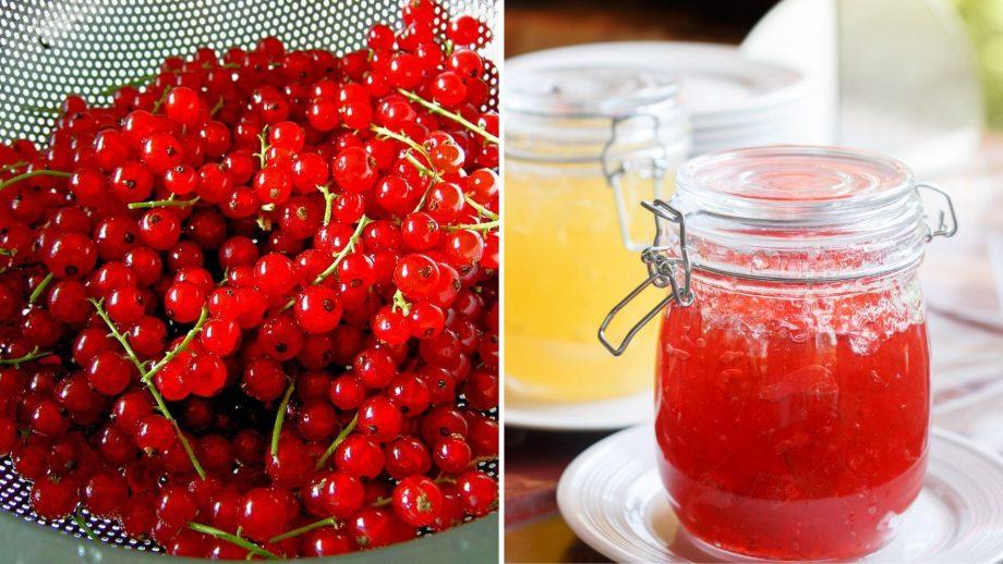 Варенье из красной смородины на зиму пятиминутка 3 рецепта приготовления